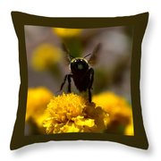Disappearing Wings Throw Pillow
