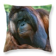 Disapproving Glance Throw Pillow