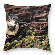 Disfigured Bird Throw Pillow