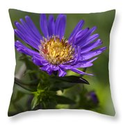 Display Of Softness Throw Pillow