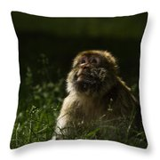 Distant Thoughts Throw Pillow