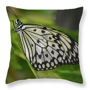 Distinctive Side Profile Of A White Tree Nymph Butterfly Throw Pillow