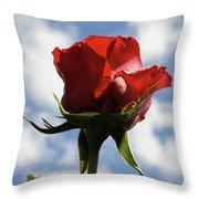 Diva Rose Throw Pillow