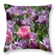 Divine Tulip Display Throw Pillow