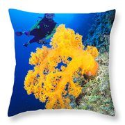Diving, Australia Throw Pillow by Dave Fleetham - Printscapes