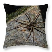 Dock Spider Throw Pillow