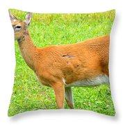 Doe A Deer Throw Pillow