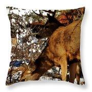 Doe And Buck Throw Pillow