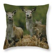 Doe And Young Deer Throw Pillow