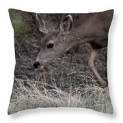 Doe Carefully Grazing In Tombstone Throw Pillow