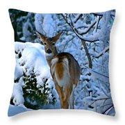 Doe In The Snow In Spokane 2 Throw Pillow