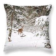 Doe In Winter Snow  Throw Pillow