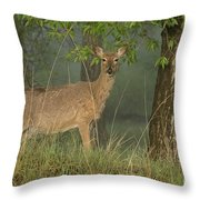 Doe On A Foggy Morning In Wyoming Throw Pillow