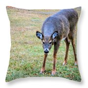 Doe Stomp Throw Pillow