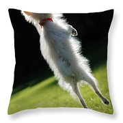 Dog - Jumping Throw Pillow