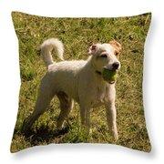 Dog And A Ball Throw Pillow