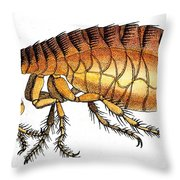 Dog Flea, Illustration Throw Pillow