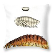 Dog Flea, Lifecycle, Illustration Throw Pillow