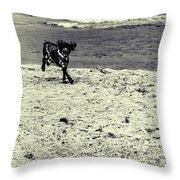 Dog Frolicking On A Beach Throw Pillow
