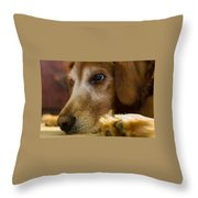 Dog In Thought  Throw Pillow