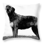 Dog: Irish Wolfhound Throw Pillow