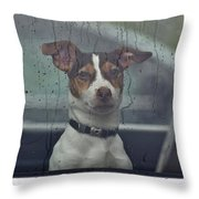 Dog Looking Out Car Window Throw Pillow