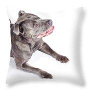 Dog Looking Up To Pet Copyspace Throw Pillow