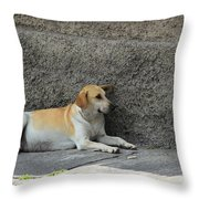 Dog Next To A Wall Throw Pillow