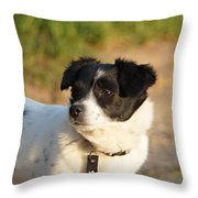 Dog On Sun Throw Pillow