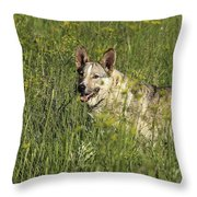 Dog Portrait Throw Pillow