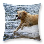 Dog Running On Shallow Lake Shore Throw Pillow