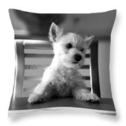 Dog Sitting On The Table Throw Pillow