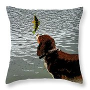 Dog Vs Perch 4 Throw Pillow
