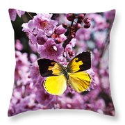 Dogface Butterfly In Plum Tree Throw Pillow