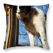 Doggone Cute  Throw Pillow