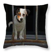 Dogs Family Throw Pillow