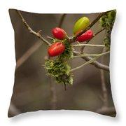 Dogwood Berries Throw Pillow