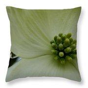 Dogwood Bloom - Closeup Throw Pillow