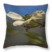 Dogwood Bloom Throw Pillow
