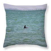 Dolphin Makes An Appearance Throw Pillow