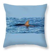 Dolphin Sighting Throw Pillow