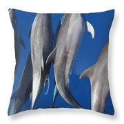 Dolphin2 Throw Pillow