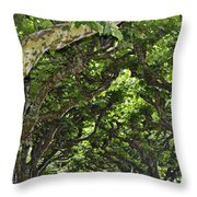 Dome Of Trees Throw Pillow