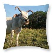 Domestic Animal 02 Throw Pillow