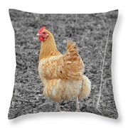 Domestic Feathered Beauty Throw Pillow