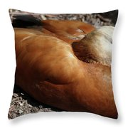 Domestic Mandarin Duck Close Up Throw Pillow