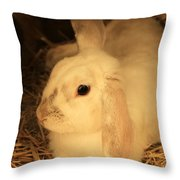 Domesticated Rabbit Throw Pillow