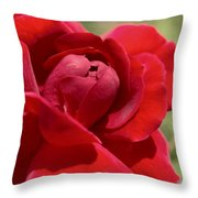 Dominica Red Rose Throw Pillow