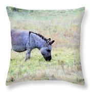 Donkey 005 Throw Pillow