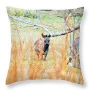 Donkey 006 Throw Pillow